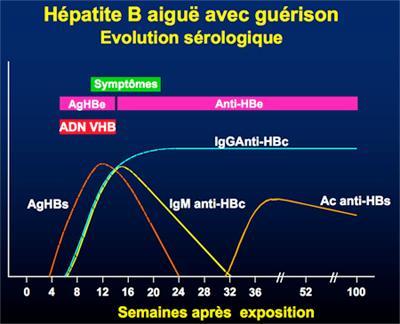 Hépatite Virale B - Épidémiologie, Évolution naturelle - CHB ...